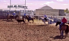 Summer Team Roping at Olds Regional Exhibition on Tuesdays and Fridays at 7 pm and Sundays at 4 pm. Drop-ins welcome.